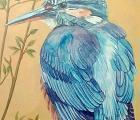 CDKG09 - Kingfisher